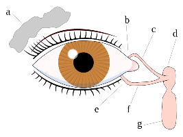 dry eye care and treatment preview