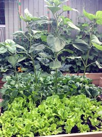 Improve Your Mental Health with Gardening This Summer preview