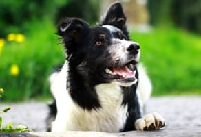 Ivermectin for Pets: All You Need to Know preview