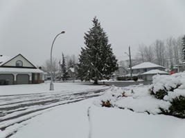 Photo taken by Tiffany 02/23/2014 4:23pm Surrey BC